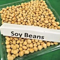 黃豆製品雌激素過多 易導致乳癌?食藥署駁斥謠言
