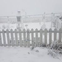 【安全第一】玉山又白頭合歡山降冰霰 追雪車潮湧現