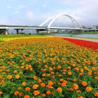 Dazzling flora sea at Guanshan Riverbank Park in Taipei