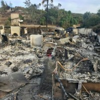 10,000 exotic birds killed as Taiwanese-American family loses livelihood to California wildfires