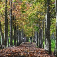 Enjoy colorful leaves along the longest forest bikeway in Taiwan