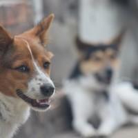 吃狗肉如犯罪 南韓動保團體救逾百隻狗於水火