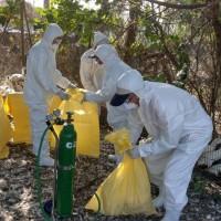 屏東枋寮爆出H5N2禽流感 撲殺超過5千肉鴨