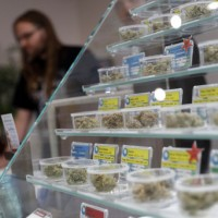 2018元旦大禮 美國加州解禁娛樂用大麻