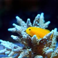 暖化加劇!科學家:珊瑚白化速度是1980年的五倍