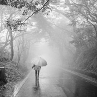 Photo of the Day: Rainy day on Yangmingshan