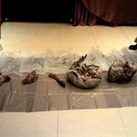 【踢爆】北市知名餐廳用保育類動物宴客 冰庫查獲山羌、野山羊屠體