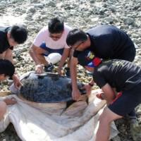 太平島海巡署伸援手 綠蠵龜脫困返回大海