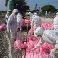雲林縣鴨隻染H5N6禽流感 全數撲殺防疫