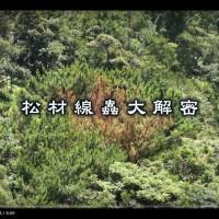 林試所:從技術到藝術展現台灣森林之美