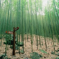 Manyueyuan the most negative ions-enriched among eight Taiwanese forest parks, research