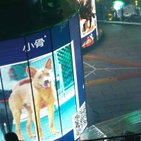 Taipei Lantern Festival to promote stray dog adoption