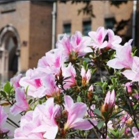 2018 Taipei Azalea Festival to begin on March 14