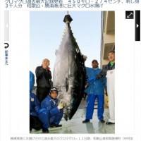 日本捕獲超大黑鮪魚! 450公斤破70年紀錄