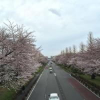 絕種倒數計時? 日本總人口連續9年減少