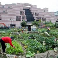 「全台最貴菜園」每坪449萬元賣出 鄰近地區一半價格