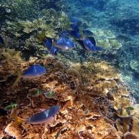 研究:全球溫升1℃ 致澳洲大堡礁30%珊瑚白化