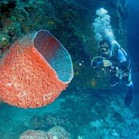 台灣「最大種原庫」 逾90新物種悠遊南沙群島海域