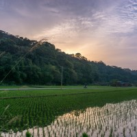 Taiwan agricultural working holiday program for Southeast Asian nations to start in June: COA