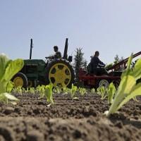 美蘿蔓生菜大腸桿菌疫情增溫 98人感染