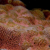 Mass coral spawning comes early this year in Taiwan's Kenting National Park