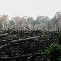秘魯亞馬遜雨林 每年12.3萬公頃林地遭濫砍消失