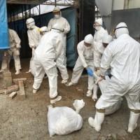 雲林爆H5N2禽流感 16379隻雞遭撲殺