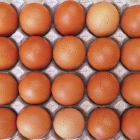 Carrefour Taiwan first supermarket in Asia to pledge cage-free egg policy
