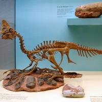日研究:恐龍會像鳥一樣呵護孵蛋