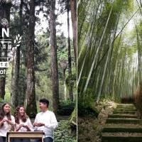 Sample Taiwan's famousAlishan tea along the mountain's scenic trails