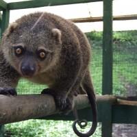 波蘭動物園迎新 易危蘇島袋貓報到