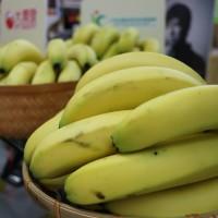 目標5,000公噸 農糧署:產地青香蕉補貼每公斤5元