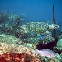 林務局:「海龜救援網」助90%瀕危物種重返海洋