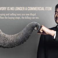 WildAid Ambassador Yao Ming Urges Travelers to Say No to Ivory in Laos