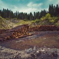 哥倫比亞非法砍伐攀升 去年林地縮減23%