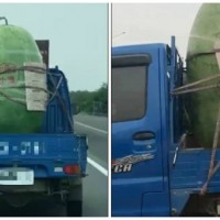 Photo of the Day: Mother of all melons spotted in Taiwan