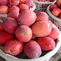 天然ㄟ尚好 農委會推出不褐變芒果乾