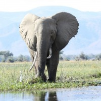 Taiwan's ivory ban to enter into force in 2020