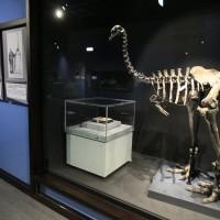 倫敦《大英自然史博物館展》絕種渡渡鳥及達爾文手稿再現!中正紀念堂即日起開展至9月