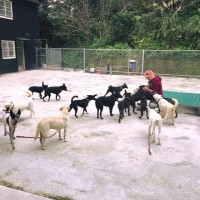 British woman in Taipei faces legal battle over rescued stray dogs