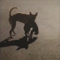 Video shows dog caring for cat hit by car in southern Taiwan