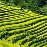 農委會:藉由APO國際研討會 提高台灣能見度