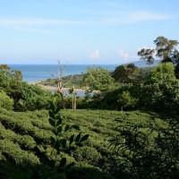 特殊人文歷史與自然生態 林業試驗所開放日治時期「滿茶古道」