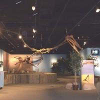 完整保存!1.5公尺巨大翼龍化石於美國出土