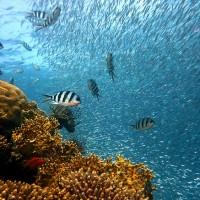 保護原始海洋生態 新喀里多尼亞設生人勿近保護區