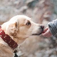 美FDA警告 藥癮者藥物來源新招 歪念頭動到寵物身上