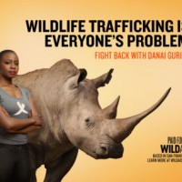 Danai Gurira Fights Back Against Rhino Poaching as Malaysia Seizes Rhino Horns In Transit to Vietnam