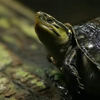 西班牙警方破獲  歐洲規模最大非法烏龜養殖場