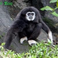 以愛守護「祖父母節」 大小朋友到台北市立動物園歡慶
