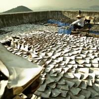 WildAid:保育海洋生態 從拒吃魚翅開始